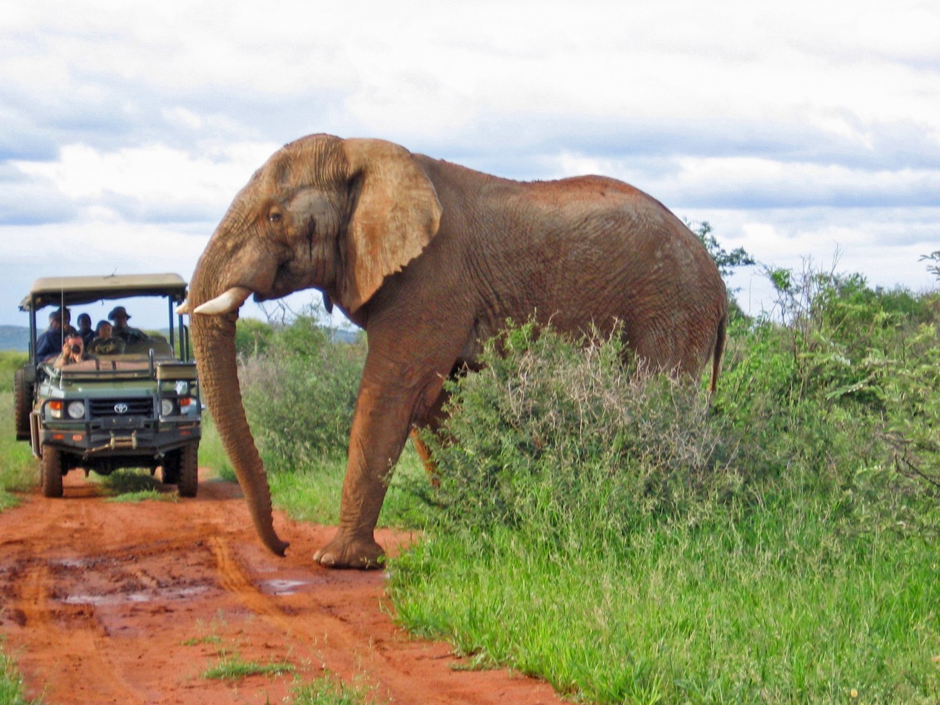 Student Travel - South Africa Safari - Elephant Crossing