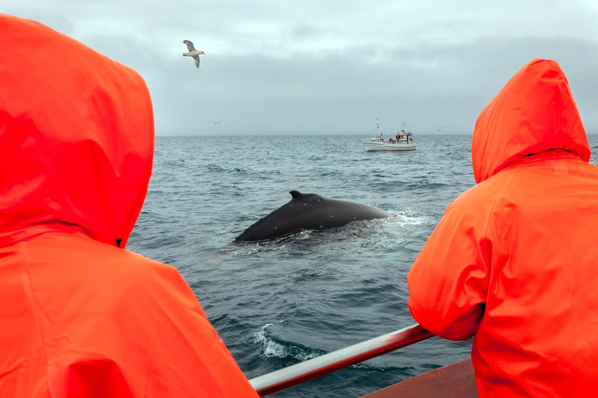 Quo_Iceland_WhaleWatching_Web-Crop